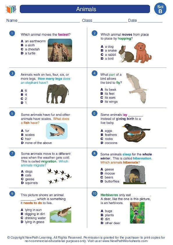 Animals Science Worksheets And Study Guides Second Grade Second Grade Science Worksheets Science Second grade science worksheets