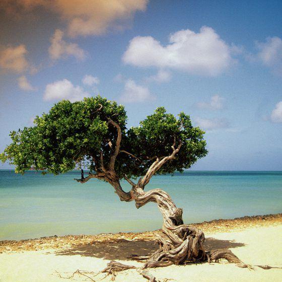 Image Result For Bora Bora All Inclusive Vacation Fresh All Inclusive Resorts All Inclusive Resorts In Bora Bora