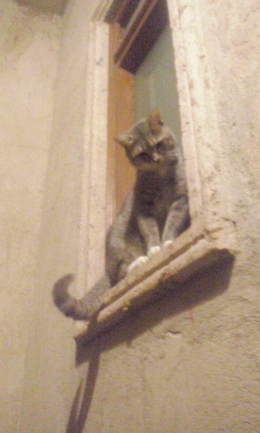 Hasta parecen novios... éste arriba, en el balcón...