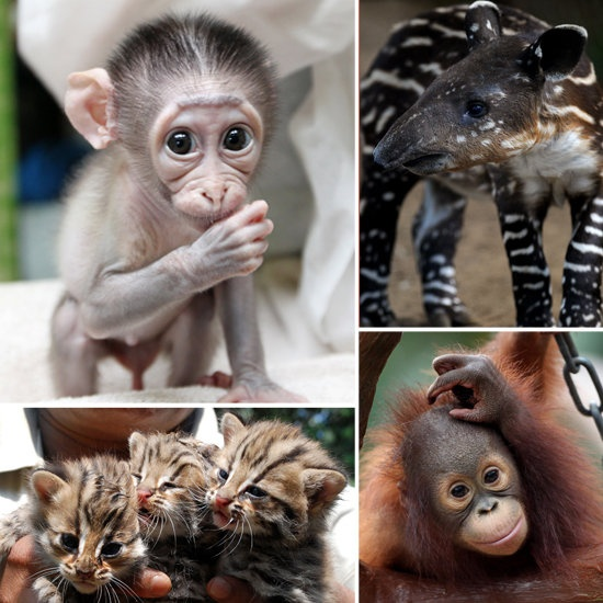 Photos of Cute Baby Zoo Animals Baboon