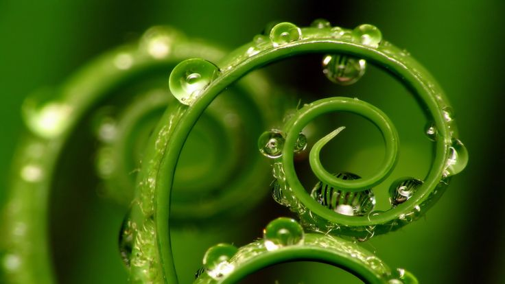 Delicate curls, juicy green color and dazzling dew drops. What's not to love?