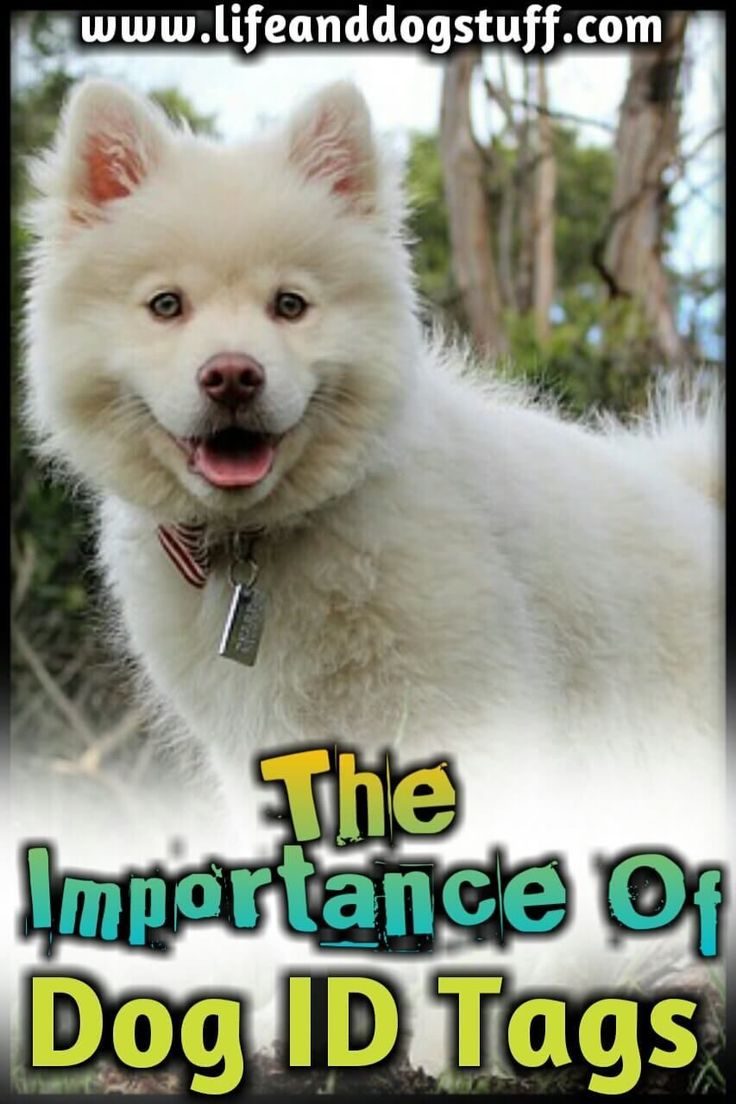 Cute Aesthetic Names For Dogs