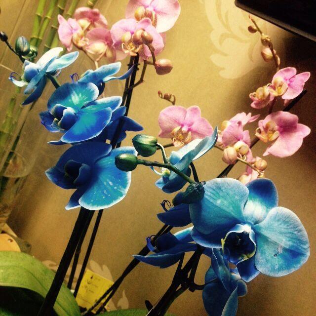 Orchids in special colors. www.e-fertilia.gr