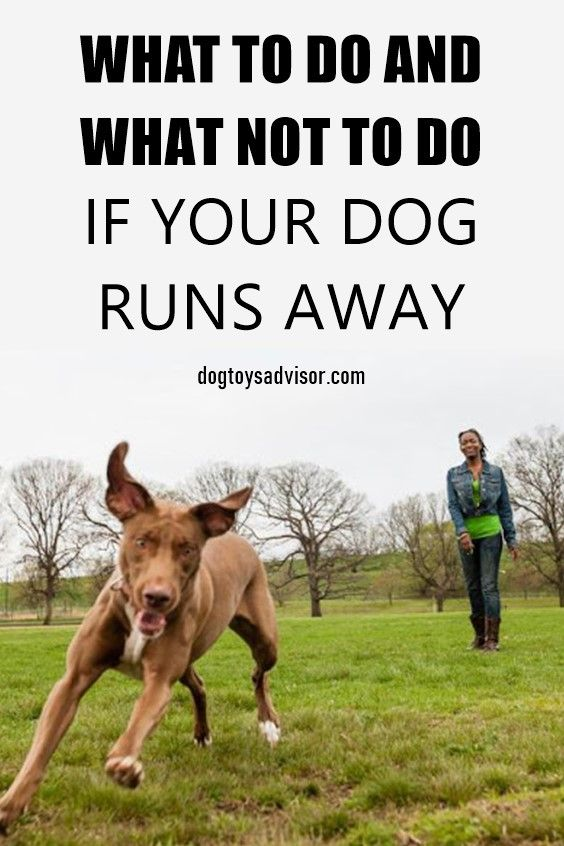 Pin By Shelly Skipple On Dogs In 2020 Training Your Dog Your