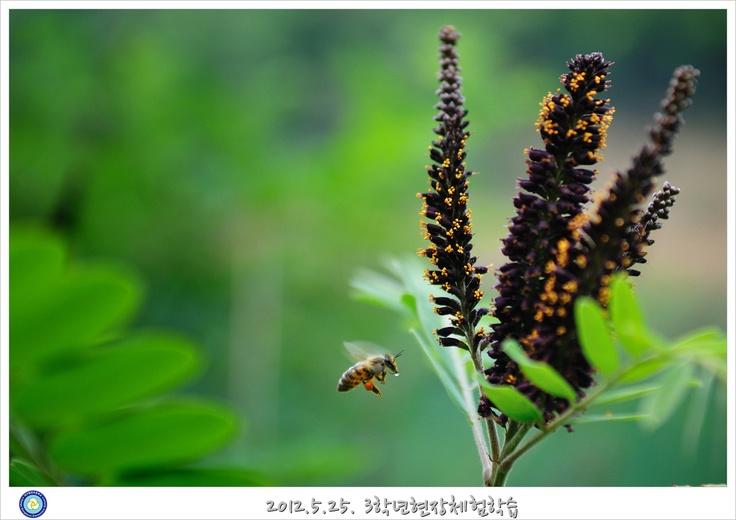 봉무공원의 벌
