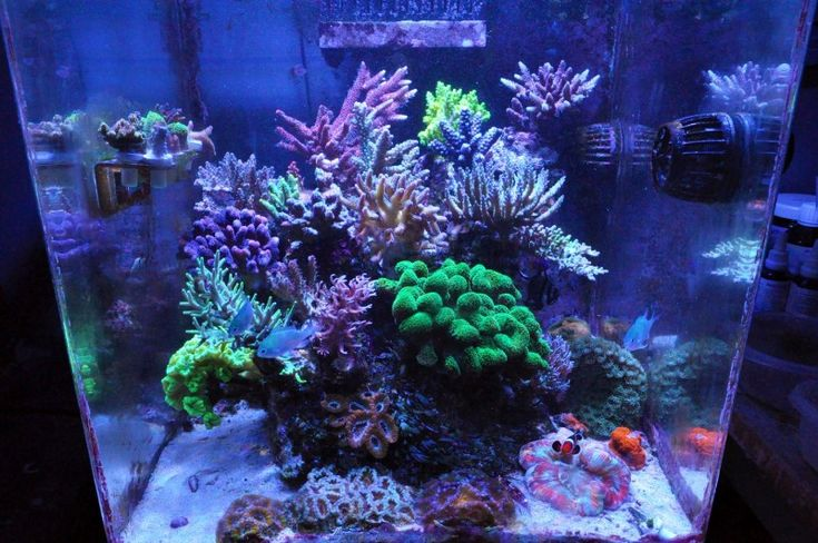 57 best images about reef tank aquarium on pinterest reef knot water tank and mantis shrimp. Black Bedroom Furniture Sets. Home Design Ideas