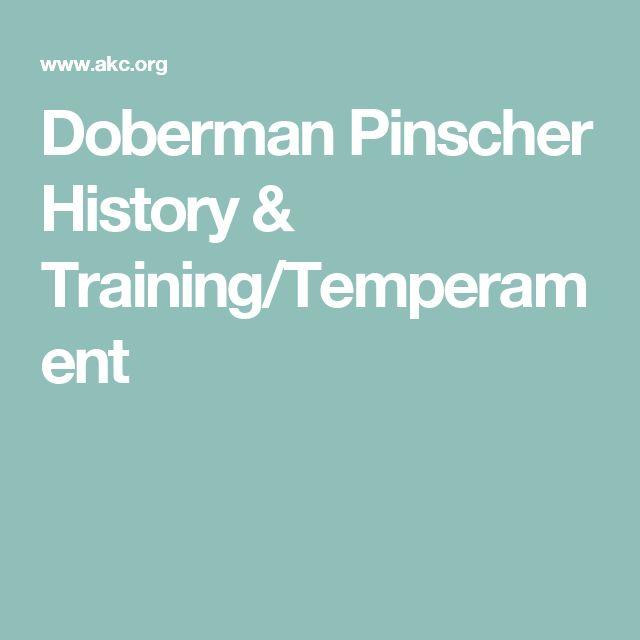 Doberman Pinscher History & Training/Temperament