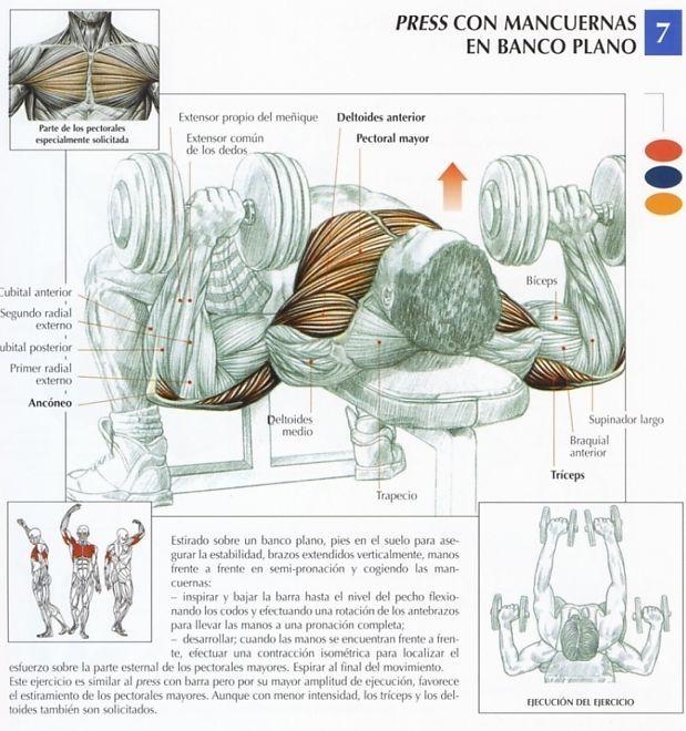 Este ejercicio es similar al press de banca con barra ,pero por su mayor amplitud de ejecución, favorece el estiramiento del pectoral mayor.