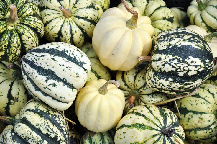 pumpkin pumpkins