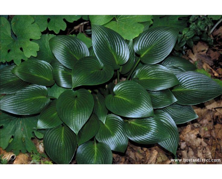 Les 411 meilleures images du tableau plantes sur pinterest for Acheter des plantes par internet