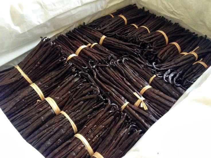 http://www.lecomptoirdetoamasina.fr/achat-gousse-de-vanille-de-madagascar-pas-chere-grande-qualite-vente-en-ligne/17-20-gousses-de-vanille-bourbon-de-madagascar-qualite-gourmet-16-a-20cm-pas-chere-achat.html  Les meilleurs gousses de vanille de Madagascar disponible sur notre site e-commerce. #lille #france #vanille #vanillebourbon #madagascar #gourmet #gousses #gousse #goussedevanille #extra #qualite