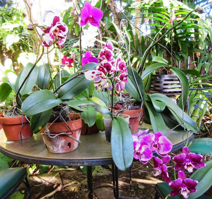 Секреты выращивания орхидей: все, что нужно знать. Выращивать дома орхидею - занятие не для ленивых, орхидея требует особого ухода, зато дарит хозяйке настоящее волшебство. Как же правильно содержать орхидею и ухаживать за ней. Содержание орхидеи Помн…