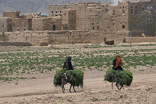 https://flic.kr/p/aJt7i | Veiled women carrying herbs on donkeys - Yemen |  © Eric Lafforgue  www.ericlafforgue.com