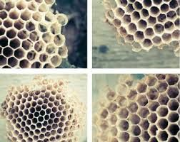 Image result for Hive art