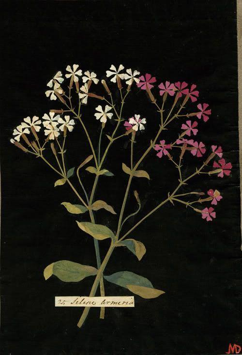 """Paper Mosaik,"" by Mary Delany, Silene Armeria, Lobel's catchfly. 1774"