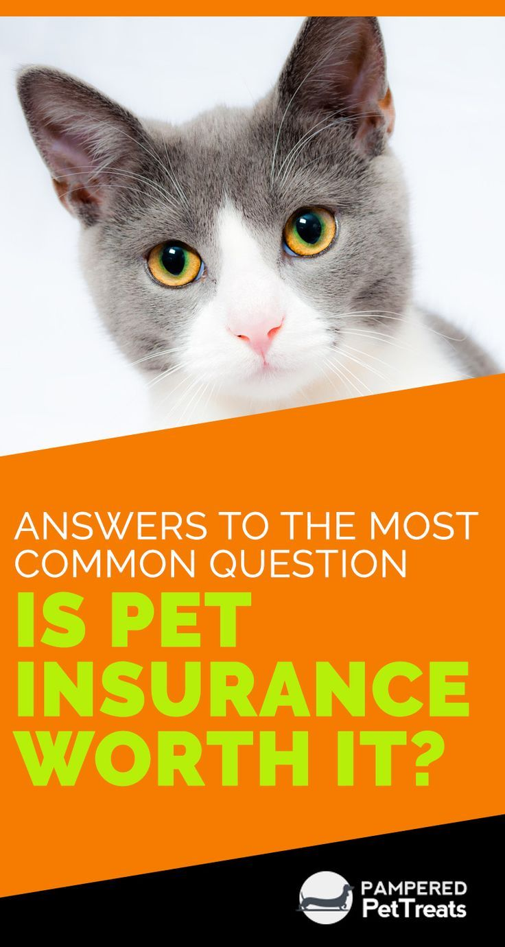 If You Are One Of Those People Who Are In The Dilemma That Is Pet Insurance Worth It Or Not You Should Best Pet Insurance Pet Insurance Reviews Pet Insurance