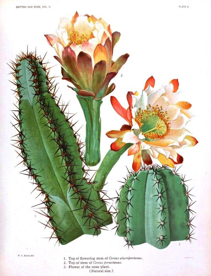 Página con varias ilustraciones botánicas antiguas para ...