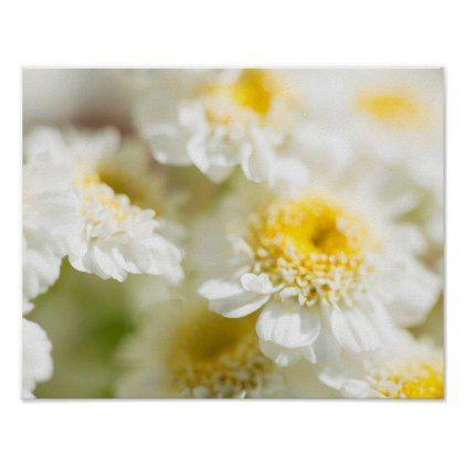White Daisy Flower Photo Poster - flowers floral flower design unique style