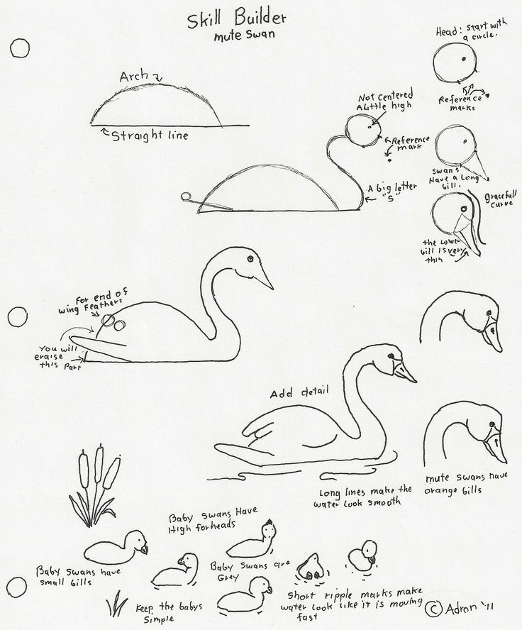 how to draw a swan httpspectrumartlessonplansblogspotcom