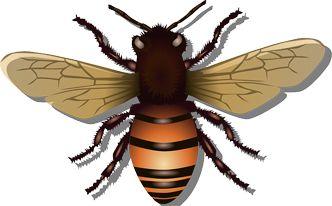 Cómo eliminar las moscas con vinagre | Decorar tu casa es facilisimo.com