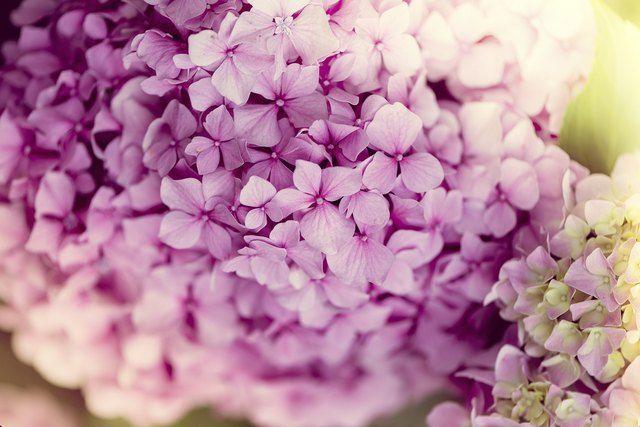 Flowers That Look Like Hydrangeas Spring Wedding Flowers Hydrangea Flower Wedding Flowers