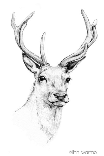 Deer Head by Linnwarme on DeviantArt