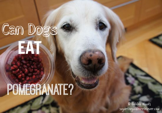 Google Can Dogs Eat Pomegranate