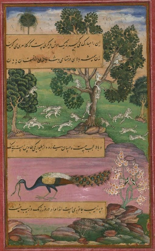 Baburnamah : a 16th c. autobiographical, illuminated, Persian / Islamic manuscript (copy), courtesy of the Walters Art Museum in Baltimore. #peacock #scroll #period #middleEastern #Persian #islamic