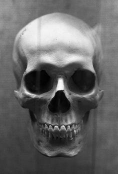 human skull photography - Buscar con Google
