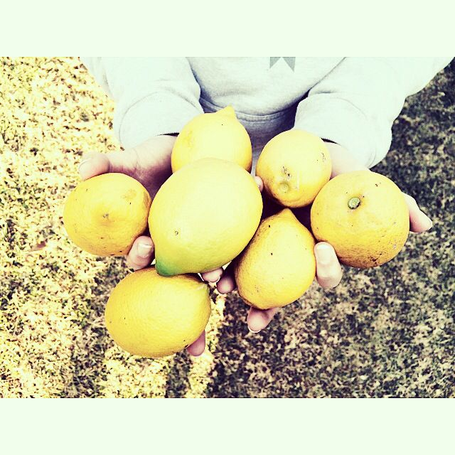 Home grown lemons