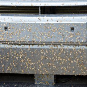 How To Use Dryer Sheets To Clean Bugs Off Car