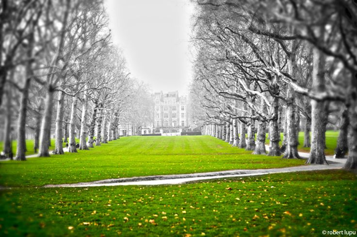 Dancing trees  - London seen by Robert Lupu