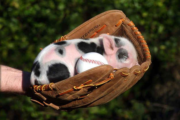 """Caught"" 
