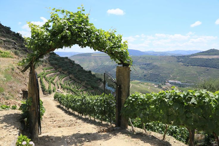 Full-day Guided Douro Walking Tour