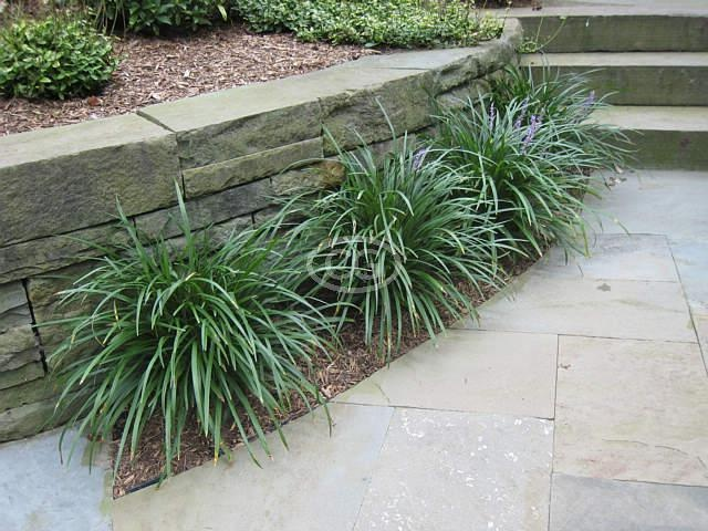 36 best images about landscape and garden on pinterest for Border grasses for landscaping