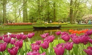 Aproveite esta série de fotos de flores lindas e delicadas, que vão alegrar o seu dia e adicionar um pouco de beleza à sua vida!