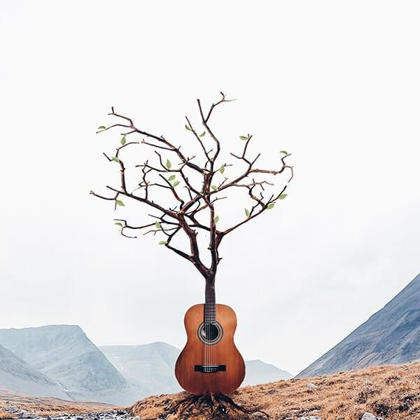 Violão árvore. Foto manipulação de Luisa Azevedo