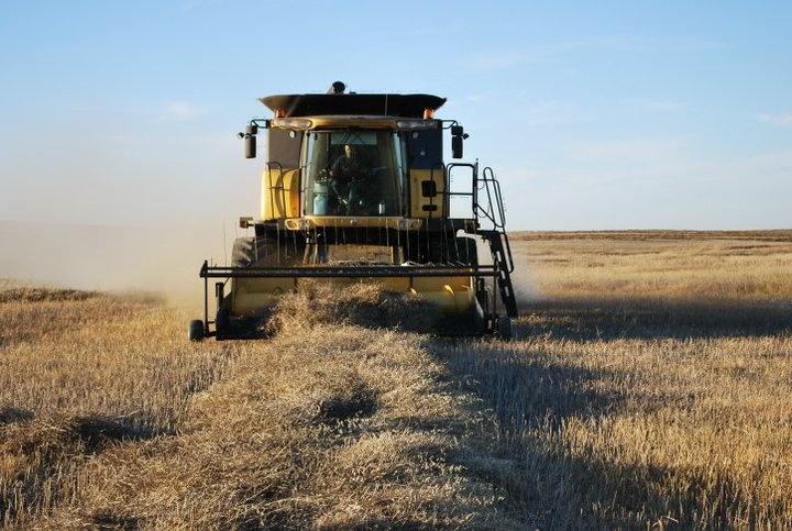 Bringing in the crops near Kerrobert