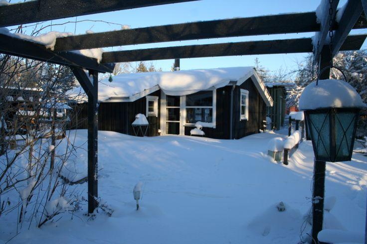 Winter 2