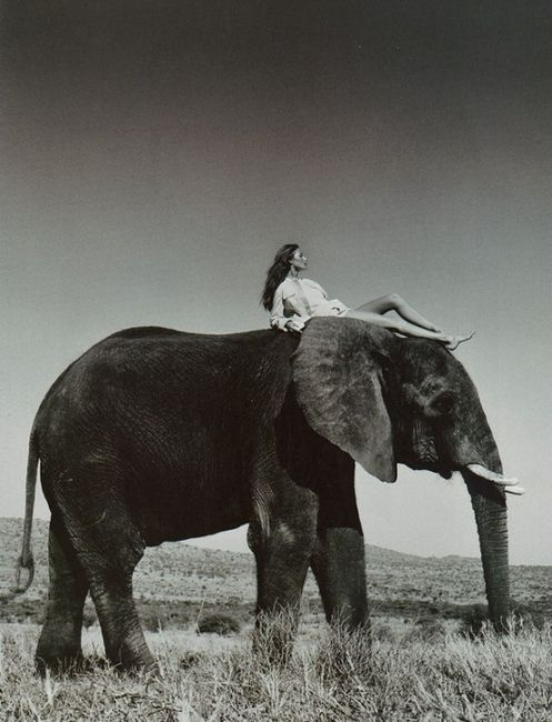 I would love to meet an elephant someday