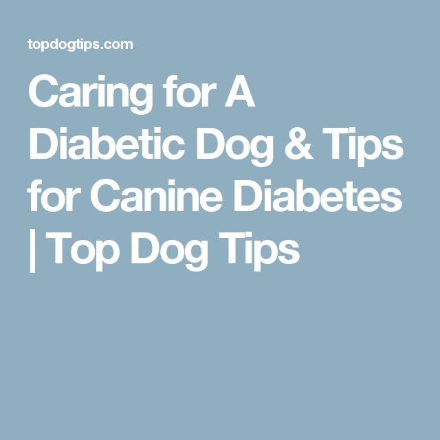 Caring for A Diabetic Dog & Tips for Canine Diabetes | Top Dog Tips