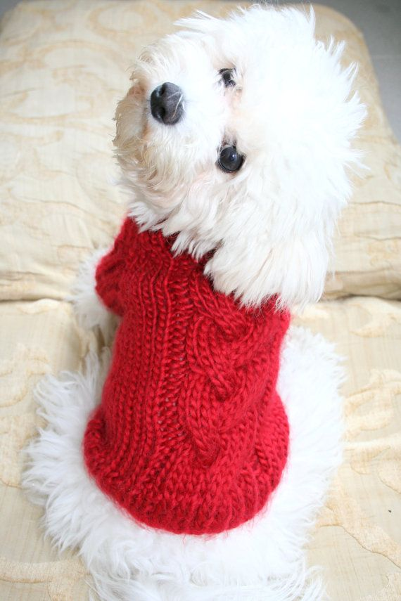 Maltese Dog Knitting Pattern : 17 Best images about I ? Maltese!!!!! on Pinterest Teacup maltese puppies, ...