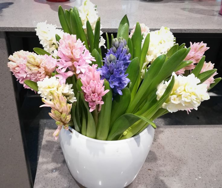 It smells like spring! Colorful Hyacinths for special moments