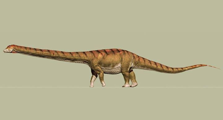 Meet Patagotitan mayorum, Biggest Animal Ever to Walk the Earth  http://www.sci-news.com/paleontology/patagotitan-mayorum-05121.html  #paleontology #science #dinosaur #dinosaurs #Argentina #livetubeonline.com