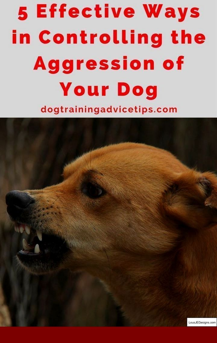 Training Tips For Dogs That Pull And Pics Of Cesar The Dog