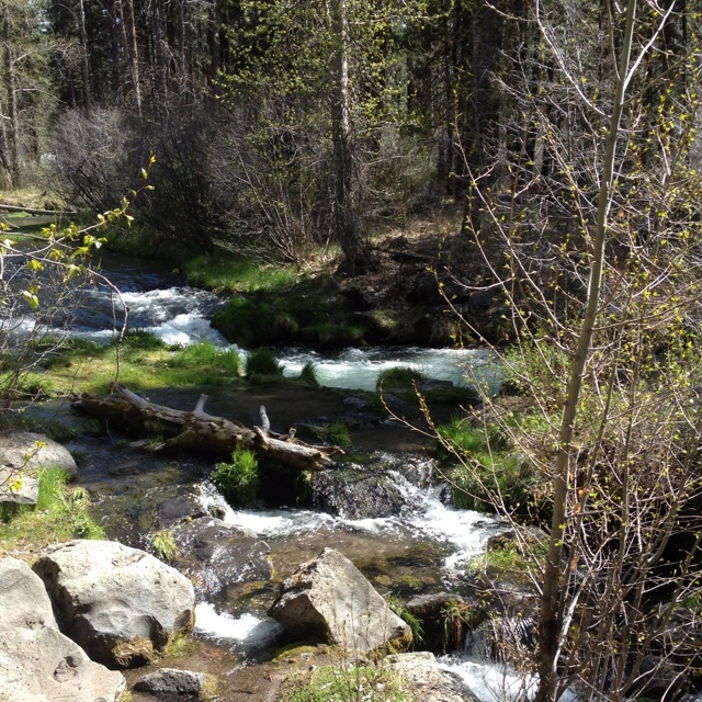 321 best pictures from around the susanville area lassen for Hat creek fishing