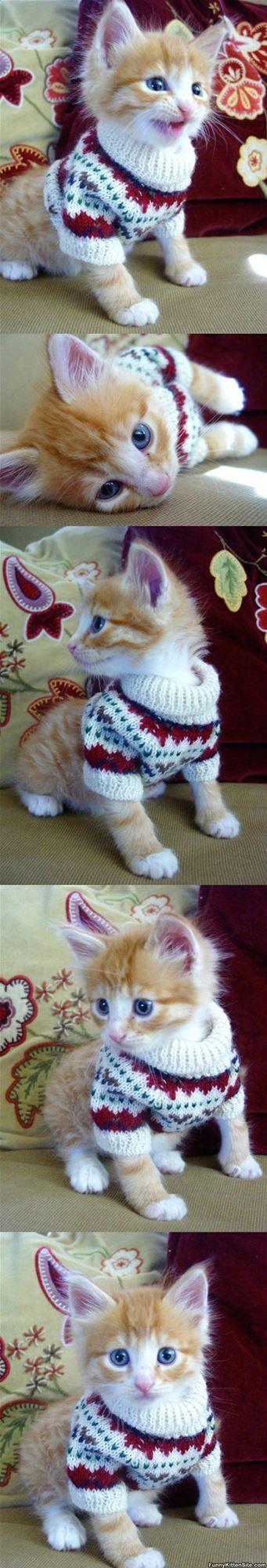 Kitten_Sweater