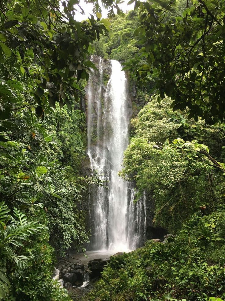 Hawaii foresta