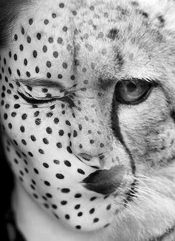 Cheetah Antonio Mora, digital collage