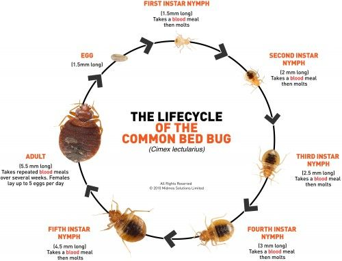 Bed-bug-infestation - http://positivemed.com/2013/12/26/what-you-should-know-about-bed-bugs/